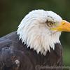 Hawk Conservancy 29-12-14  019