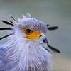 Hawk Conservancy 29-12-14  010
