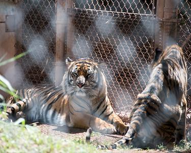 Honolulu Zoo, 2015-03-22