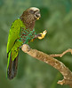 This pretty parrot was in the free-flying area of the bird house.
