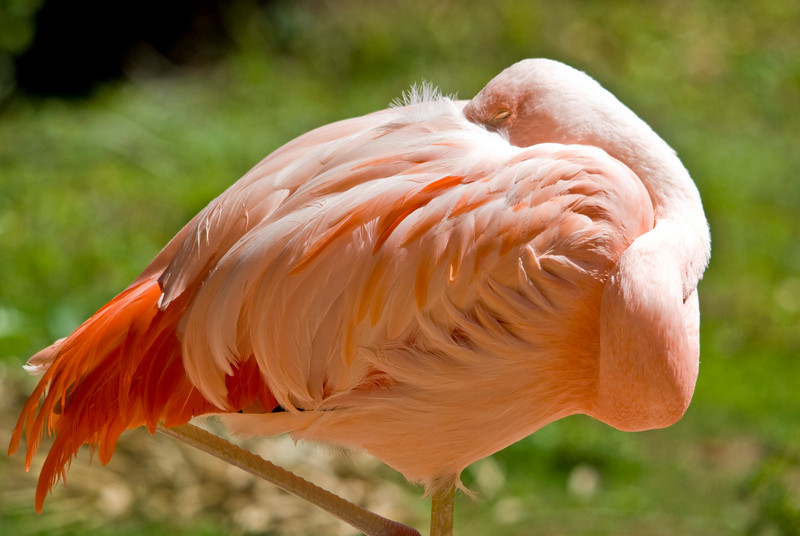 The Flamingos were mostly sleeping in the sun when we got to the zoo.