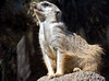 Another view of the Meerkat look-out.