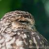 London Zoo 27-05-10 - 007