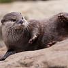 London Zoo 27-05-10 - 015