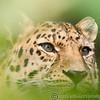 Marwell Zoo 05-07-14  0006