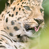 Marwell Zoo 05-07-14  0005