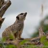 Marwell Zoo 05-07-14  0014