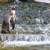 Marwell Zoo 05-07-14  0003