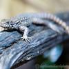 Marwell Zoo 05-07-14  0011