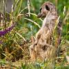 Marwell Zoo 05-07-14  0013