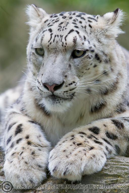 IMAGE: http://www.davidstallardphotography.com/Animals/Zoos/Marwell-Zoo-Collection/Marwell-Zoo-05-07-14/i-QsRKrC9/0/XL/Marwell%20Zoo%2005-07-14%20%200118-XL.jpg