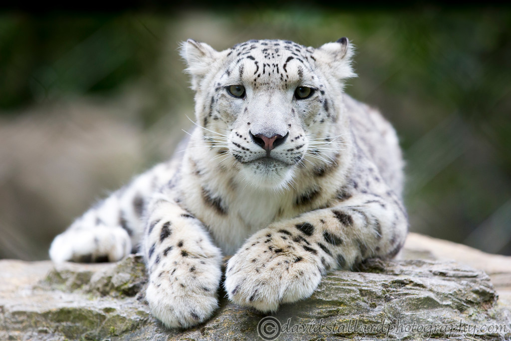 IMAGE: http://www.davidstallardphotography.com/Animals/Zoos/Marwell-Zoo-Collection/Marwell-Zoo-05-07-14/i-Sr4pfcf/0/XL/Marwell%20Zoo%2005-07-14%20%200122-XL.jpg