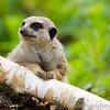 Marwell Zoo 05-07-14  0009