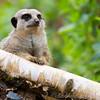 Marwell Zoo 05-07-14  0010