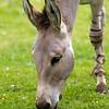 Marwell Zoo 05-07-14  0020