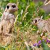 Marwell Zoo 05-07-14  0012
