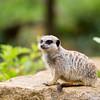 Marwell Zoo 05-07-14  0007