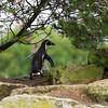 Marwell Zoo 05-07-14  0004