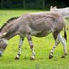 Marwell Zoo 05-07-14  0017