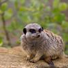 Marwell Zoo 05-07-14  0008