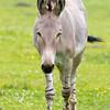 Marwell Zoo 05-07-14  0019