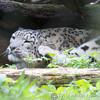 Marwell Zoo 08-10-16  0012