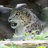 Marwell Zoo 08-10-16  0013