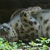 Marwell Zoo 08-10-16  0021