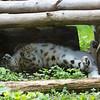 Marwell Zoo 08-10-16  0019