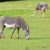 Marwell Zoo 08-10-16  0004