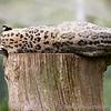 Marwell Zoo 08-10-16  0009