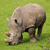 Marwell Zoo 08-10-16  0006
