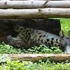 Marwell Zoo 08-10-16  0022