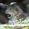 Marwell Zoo 08-10-16  0014