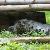Marwell Zoo 08-10-16  0020