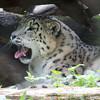 Marwell Zoo 08-10-16  0015