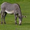 Marwell Zoo 08-10-16  0005