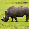 Marwell Zoo 08-10-16  0003