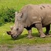 Marwell Zoo 08-10-16  0008
