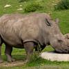Marwell Zoo 08-10-16  0007