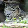 Marwell Zoo 08-10-16  0017