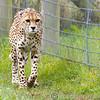 Marwell Zoo 08-10-16  0001