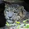 Marwell Zoo 08-10-16  0018