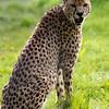 Marwell Zoo 12-05-12  198