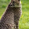 Marwell Zoo 12-05-12  197