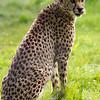 Marwell Zoo 12-05-12  200