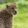 Marwell Zoo 12-05-12  201