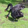 Marwell Zoo 12-05-12  217