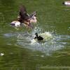 Marwell Zoo 12-05-12  215