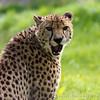 Marwell Zoo 12-05-12  199